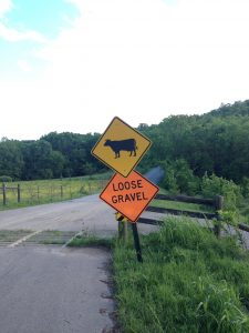 Loose gravel and cows ahead